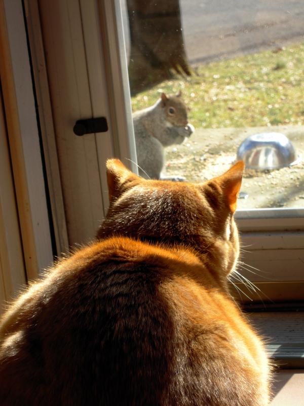 Diego & squirrel