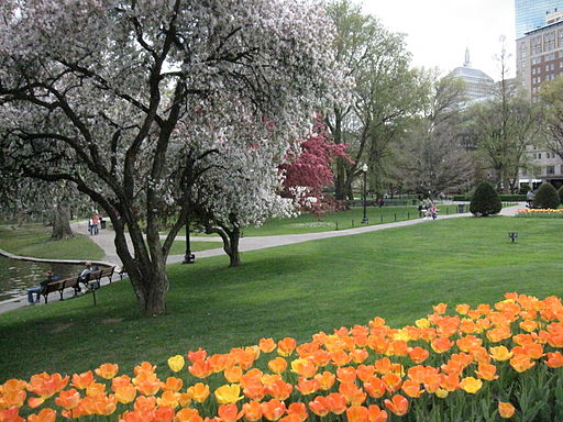 512px-2010_PublicGarden_Boston7_April